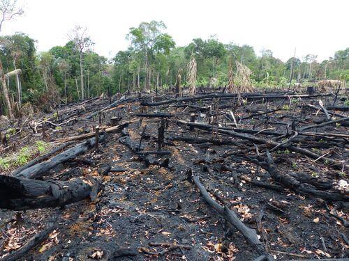 Conseguenze incendi boschivi.