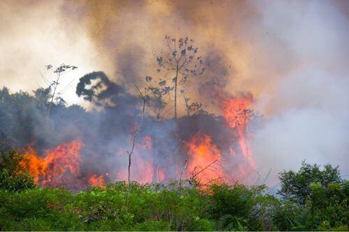 Incendio in un bosco.