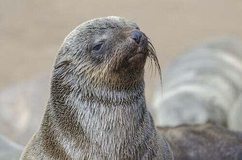 Tutte le specie e gli habitat del leone marino