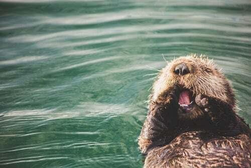 L'archeologia dietro le abitudini della lontra di mare