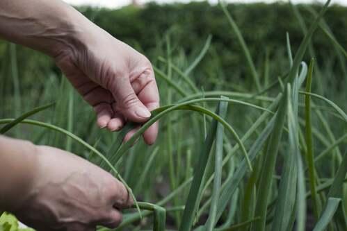 Agroecologia: possiamo ancora salvare il pianeta?