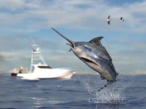 Pesce spada: caratteristiche e curiosità