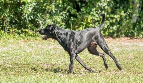 Cane che corre e gioca in un parco.