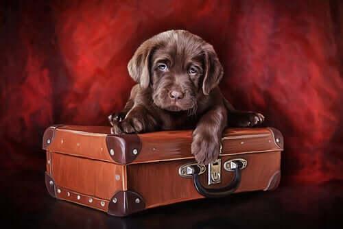 Quadro che rappresenta un cucciolo di cane sopra una valigia.