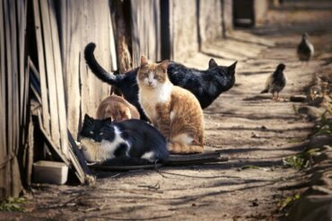 Quanti gatti ci sono in tutto il mondo?