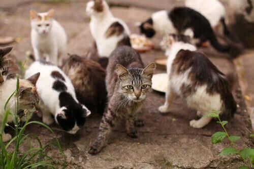 Gatti randagi che mangiano in un rifugio per gatti.