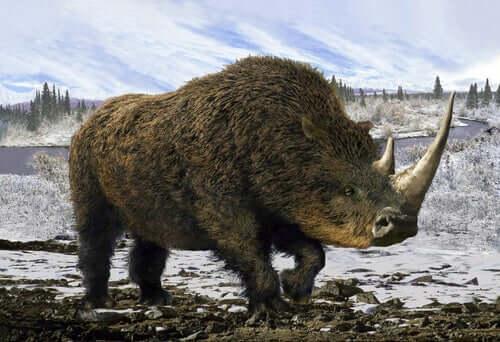 Il rinoceronte lanoso.