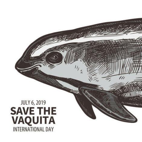 Manifesto per salvare la focena dall'estinzione.
