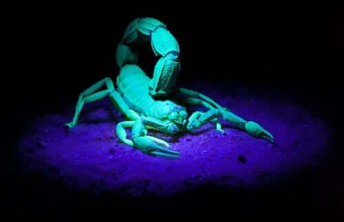 Gli scorpioni brillano al buio: cosa dice la scienza