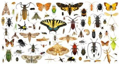 Disegno con specie di insetti.