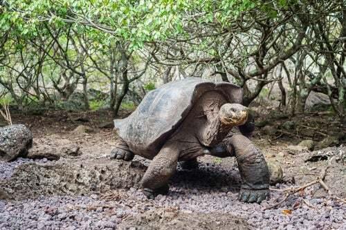 Origini ed evoluzione della tartaruga, un animale unico