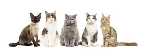 Cinque diversi gatti.
