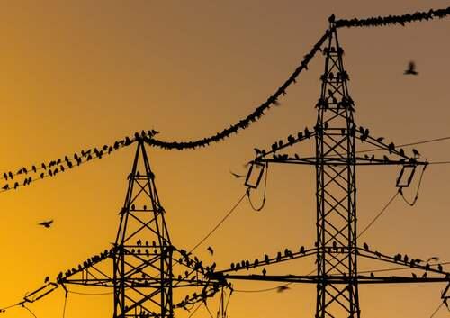 Uccelli sui cavi elettrici.