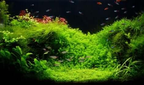 Acquario con piante.
