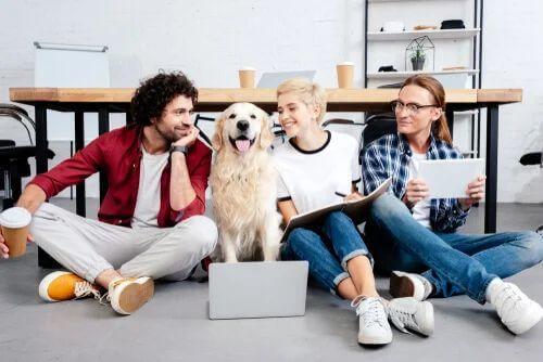 Animali domestici in ufficio: quali sono i benefici?