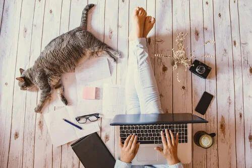 Animali negli uffici.