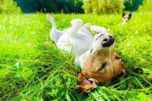 Quali sono i benefici del sole sui cani?