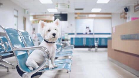Cane in sala di attesa al pronto soccorso.