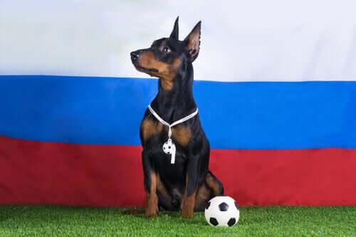 Cane allenatore di calcio.