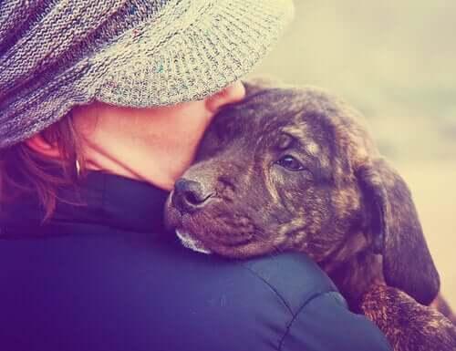 Un cane può annusare un cancro.