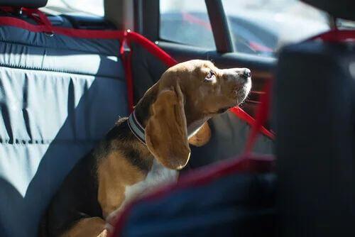 Cane chiuso in auto.