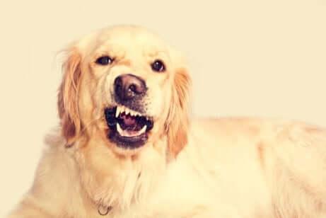 Cane con disturbi dentali.