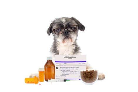 Farmaci pericolosi per i cani.