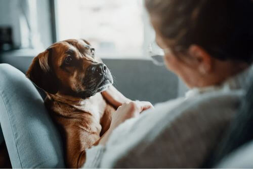 Polmonite negli animali domestici: tre trattamenti