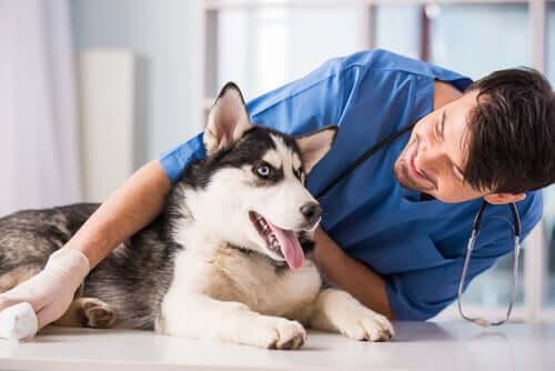 Perché i conti dei veterinari sono così alti?