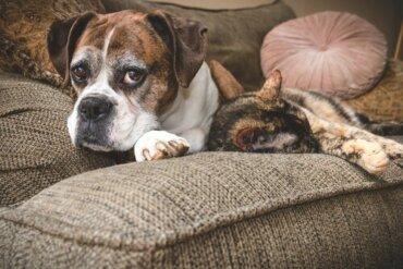 I migliori consigli per prendersi cura dei cani e dei gatti anziani