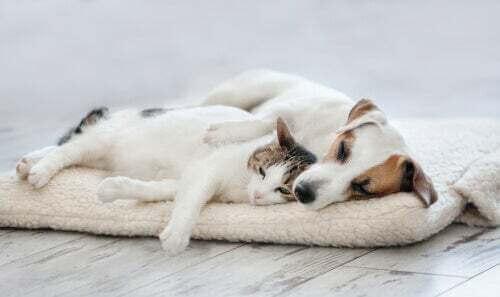 Cane e gatto che dormono.