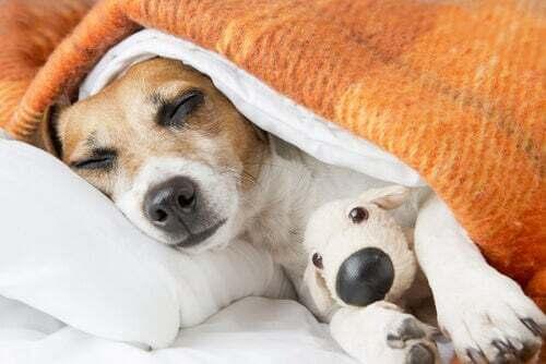 Cane che dorme con il suo peluche.