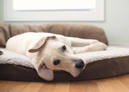 3 diversi tipi di cucce per cani: vi aiutiamo a scegliere quella giusta