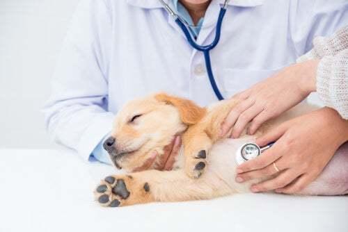 Cane con visita dal veterinario.