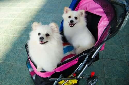 Cani dentro un passeggino.