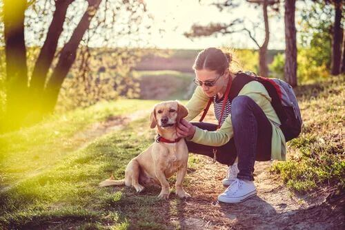 Ipotiroidismo nei cani: cause e trattamento