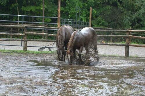 Cavalli sopravvissuti a un'alluvione danno alla luce: il miracolo della vita