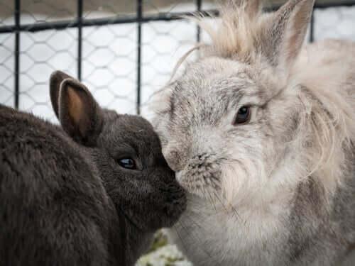 Conigli dentro la gabbia.