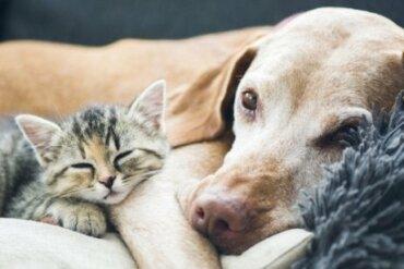 Qual è il peso ideale per i cani e per i gatti?