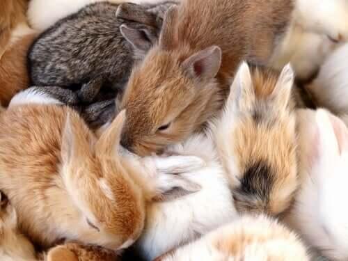 Cucciolata di conigli.