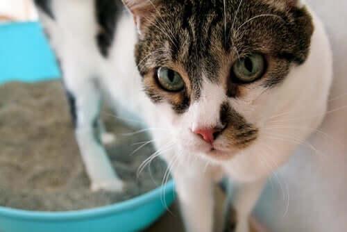 I principali disturbi urinari nei gatti