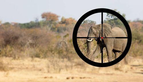 Elefante come bersaglio nel mirino dei bracconieri.