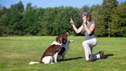 Il fischietto per l'addestramento del cane: pro e contro