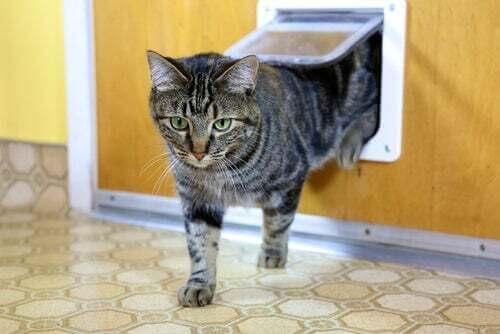 Consigli per scegliere la gattaiola per il vostro gatto