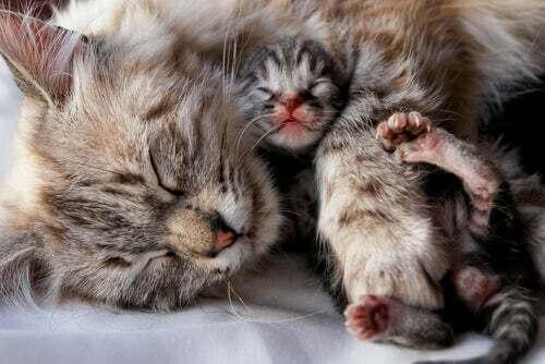 Gattino con la madre.