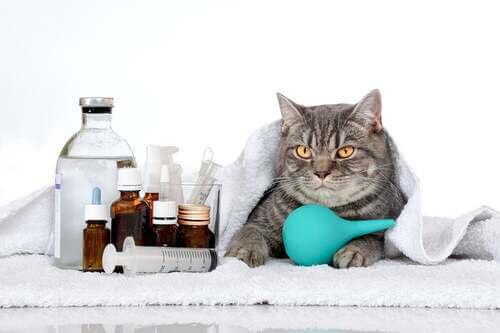 Gatto accanto a delle medicine.