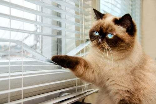 Gatto che guarda da una veneziana.