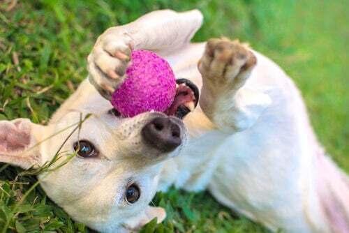 Scoprite i 5 giocattoli più amati dai cani