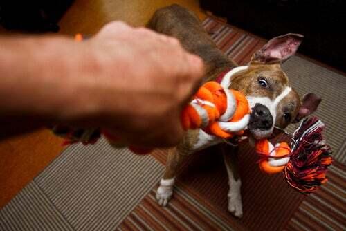 Cane che gioca con il padrone.