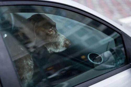 Lasciare un animale in auto: che rischi ci sono?